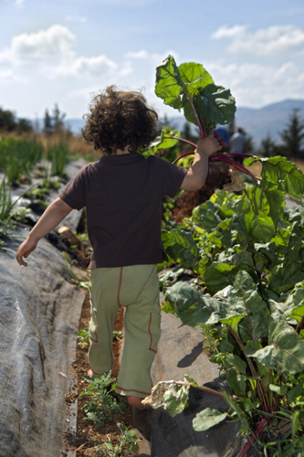 A child walking through a vegetable garden with a stalk in his/her hand.